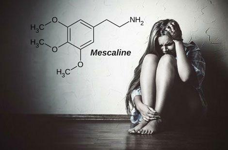 آیا-مصرف-مسکالین-در-آزمایش-تشخیص-اعتیاد-قابل-شناسایی-است