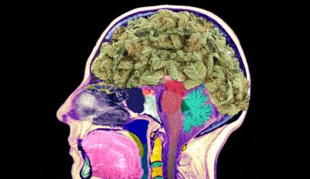 فعال-کردن-سیستم-پاداش-مغ